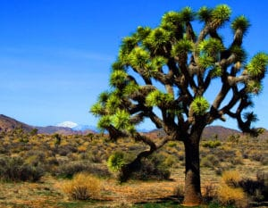 10 things You Must See at Joshua Tree National Park Near our Palm Springs Hotel