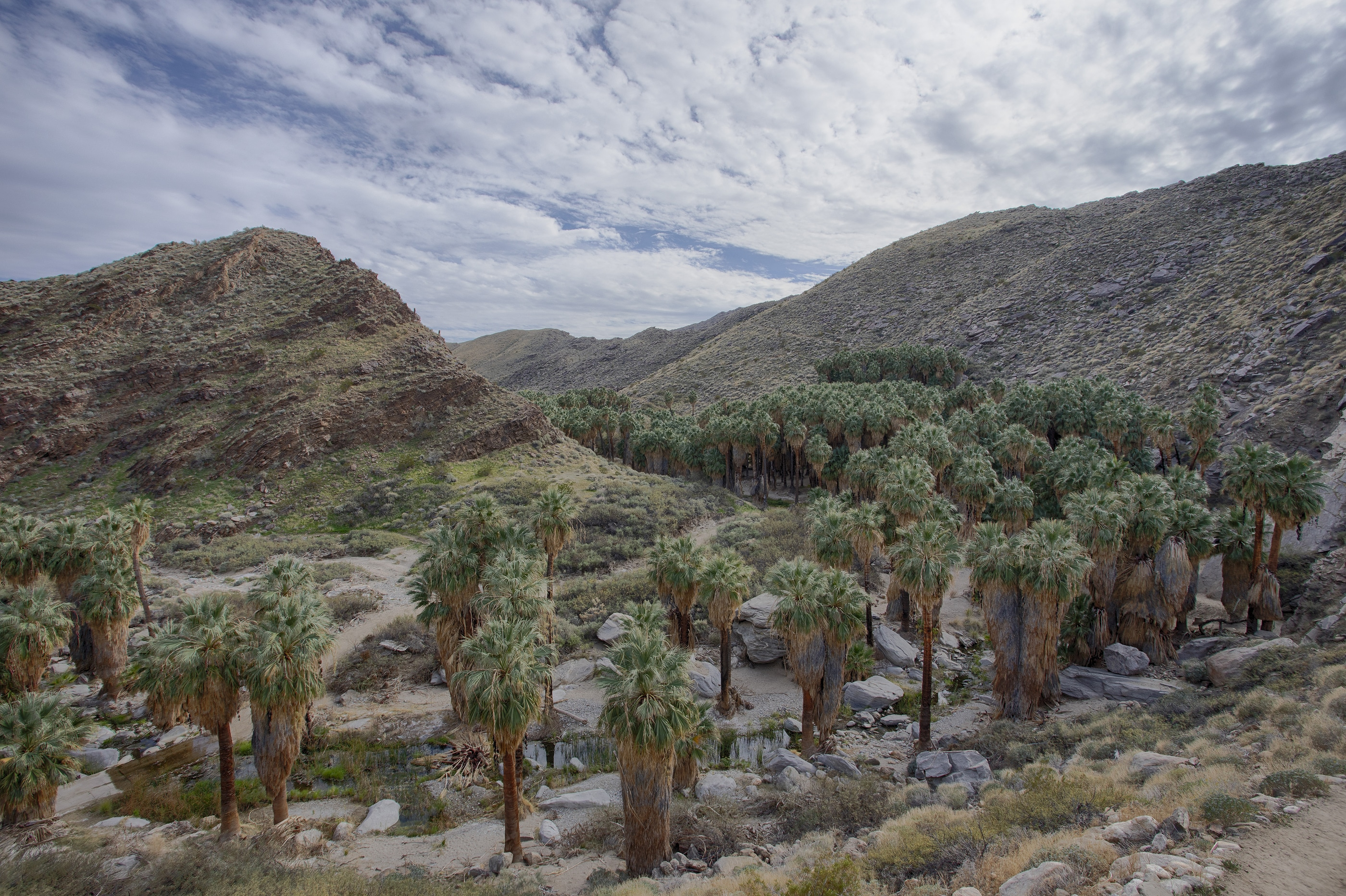 Indian Canyons is a great place to explore nature in Palm Springs.
